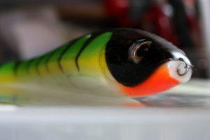 Duckfin shad
